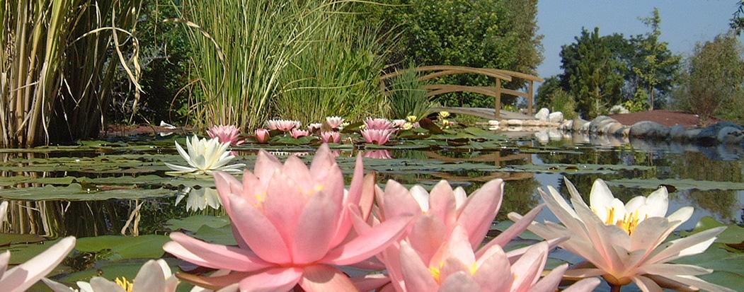 Le parc des jardins aquatiques st didier sur chalaronne 01 - Reglementation sur les feux de jardin ...